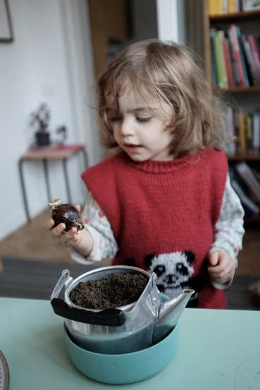 Grow and Avocado Seed Gift Planting